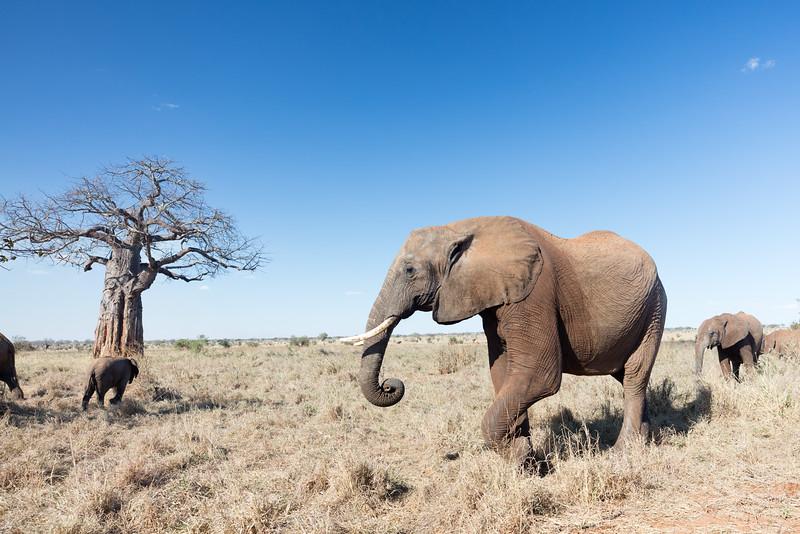 Africa - 102016 - 7868.jpg