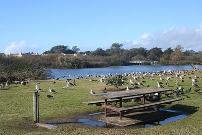 Oceano Lagoon Park: Trips