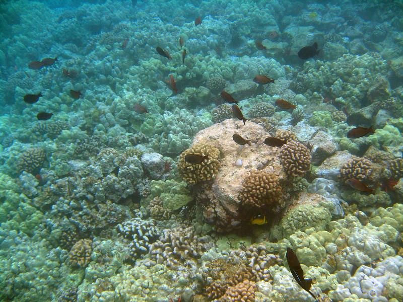 488- 20080416- Hawaii 20-Snorkelling IMG_0712.jpg