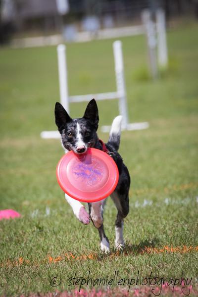 _MG_2891Up_dog_International_2016_StephaniellenPhotography.jpg