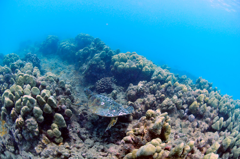 Hawaii - Hanauma Bay-42.JPG