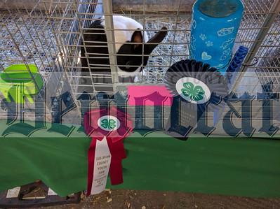 Little World's Fair/4-H Youth Fair