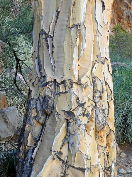 Namibia Lumix  (124).JPG