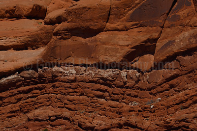 Southwest Landscape-1