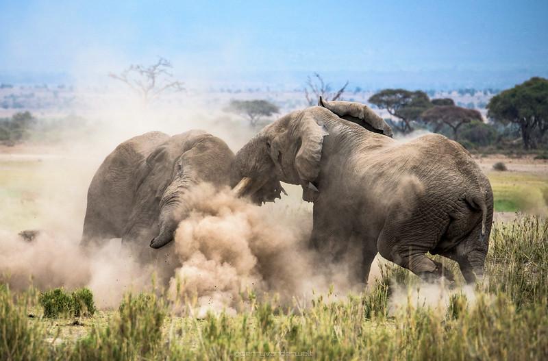 July - Amboseli