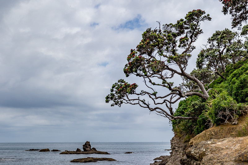 An der Tutukaka Coast