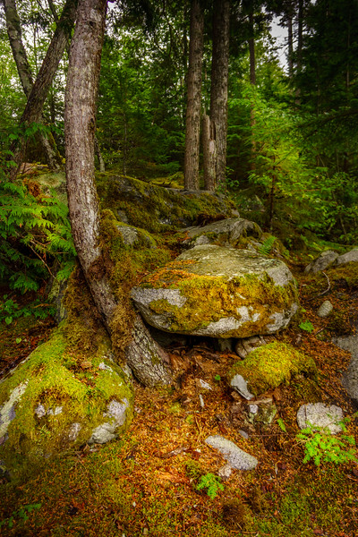 Wooded Glade 2
