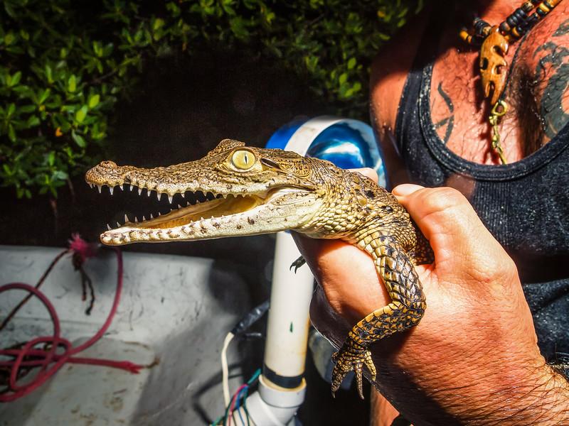 American Crocodile Education Sanctuary--29.jpg