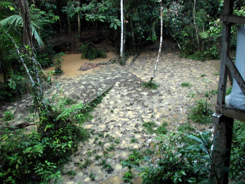 Tapir Lick at Manu Wildlife Centre, Peru (2008-07-10).psd