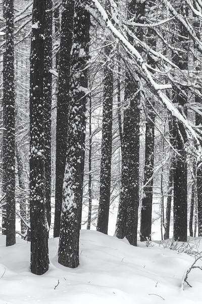 White Winter III
