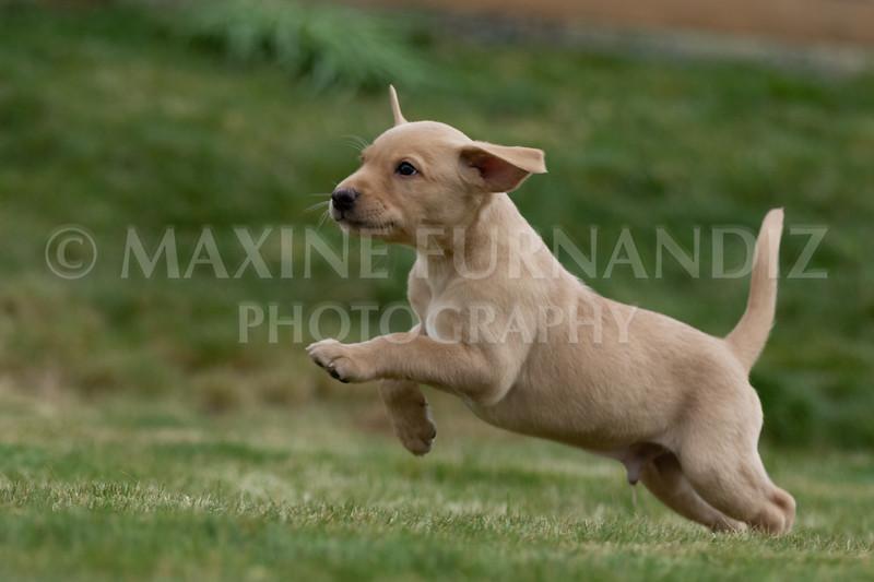 Weika Puppies 24 March 2019-6628.jpg