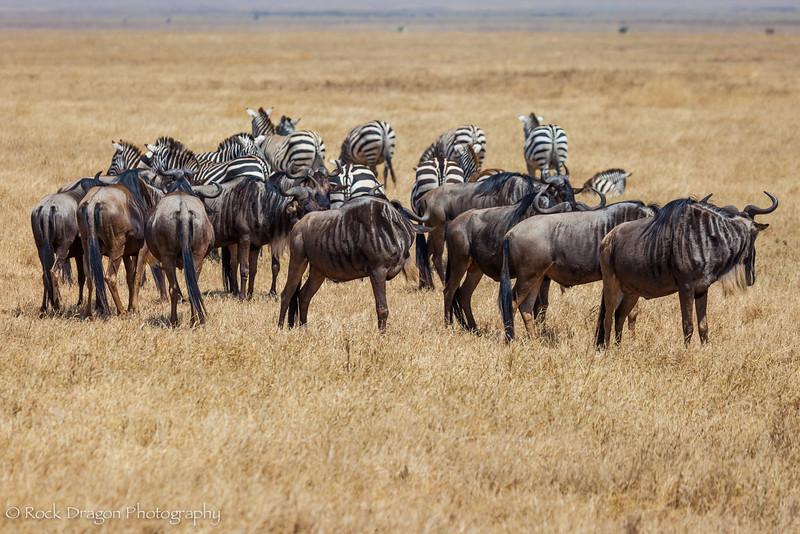 Ngorongoro-53.jpg