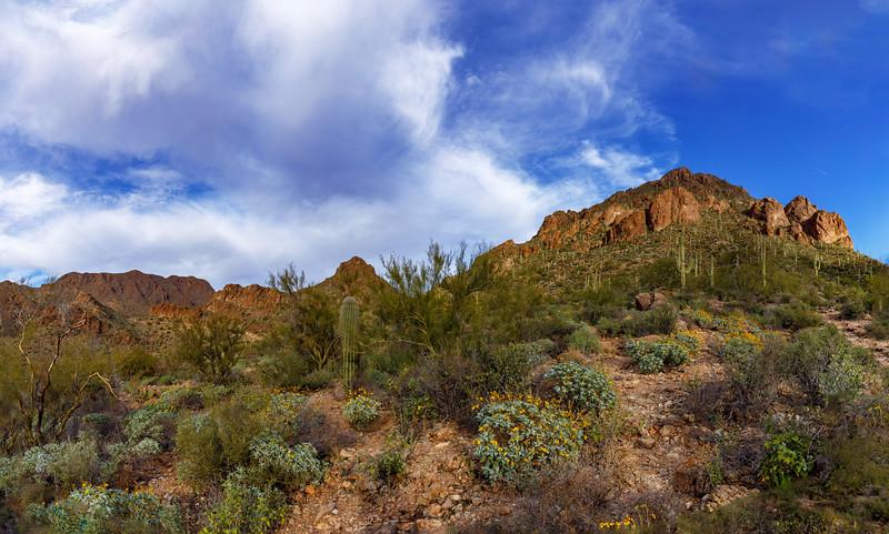 The Lush Green Desert