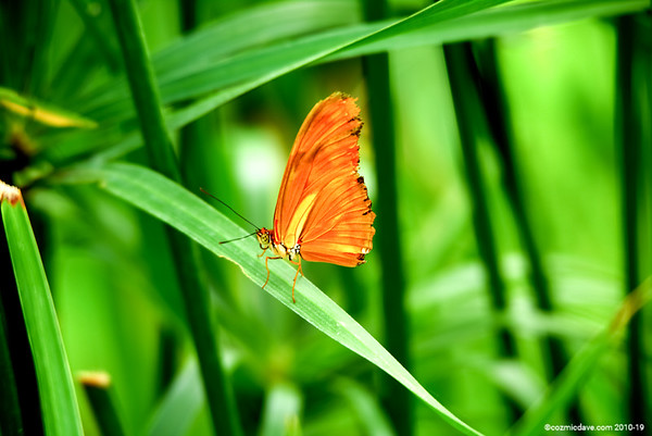 Butterfly & Moth Set 12