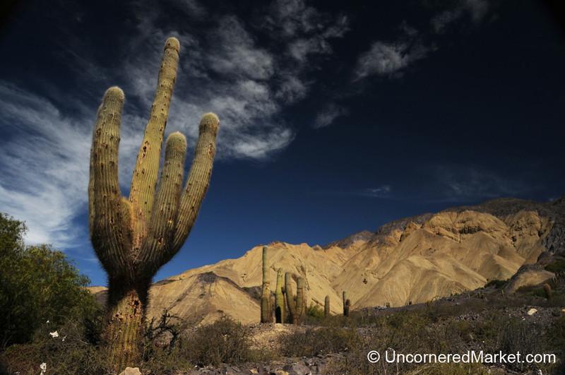 Cactus Scenery in Northwestern Argentina