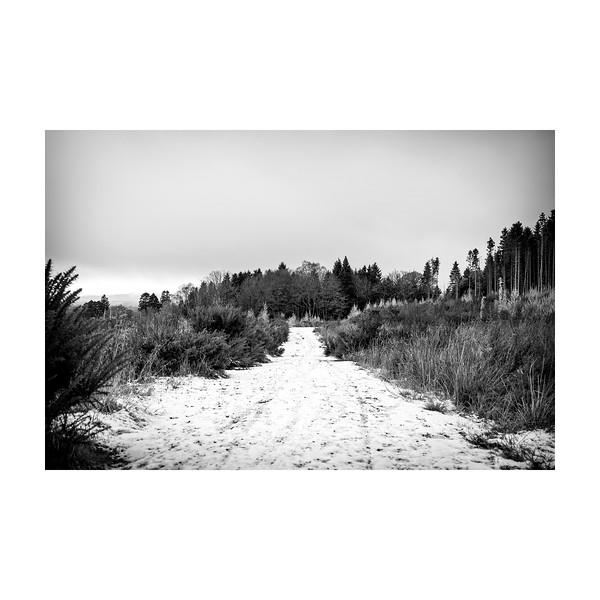 330_Snowpath_10x10.jpg