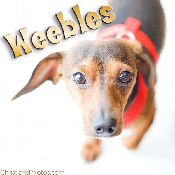 Weebles.jpg