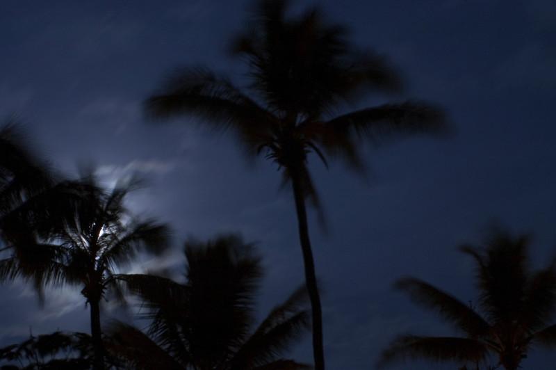 Full moon through the palm frondsNorth Shore of O'ahu, Hawai'i  March 24, 2005