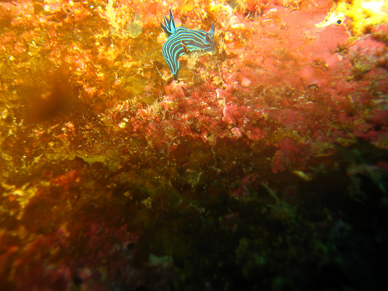 Diving in the Galapagos (321 of 392)