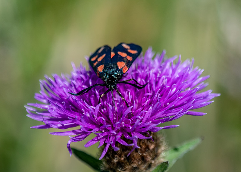 SWT_Seaford-Head-1575.jpg