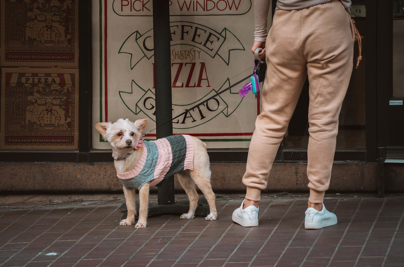 Dog sweater pizza pick up.jpg