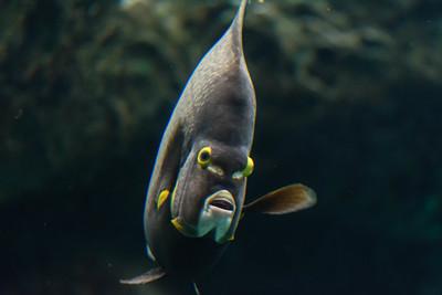 2019 Aquarium 02