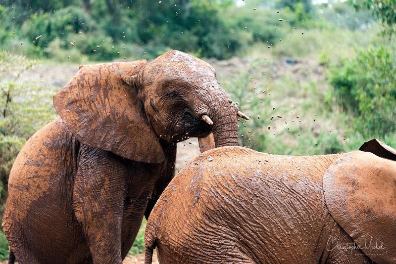 Aug312013_nairobi_blixen_elephant_2751.jpg