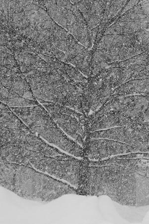New England Ice 2011
