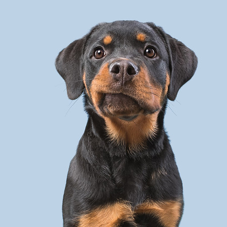 Dogsonality