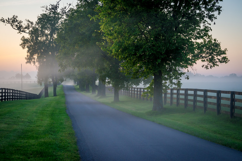 Foggy Morning Sunrise - Horse Country - Kentucky Bluegrass