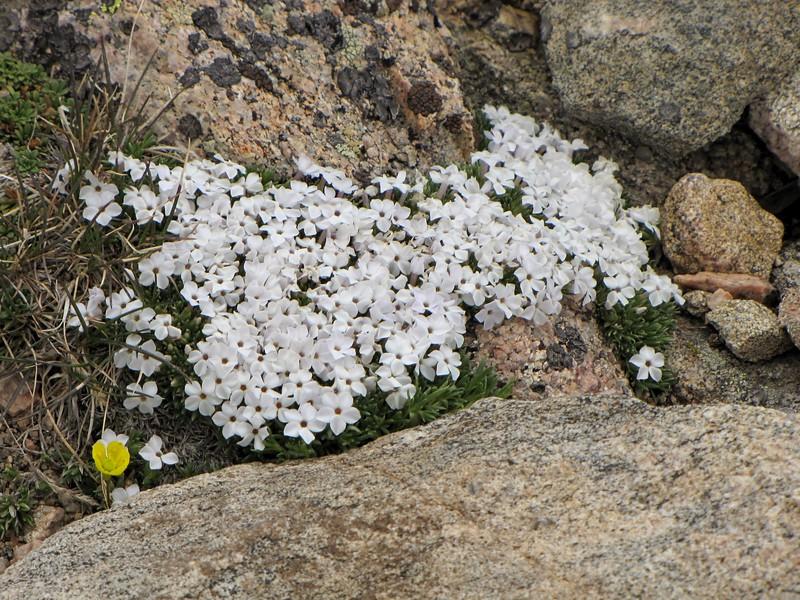 amh FLOWERS (1162).jpg