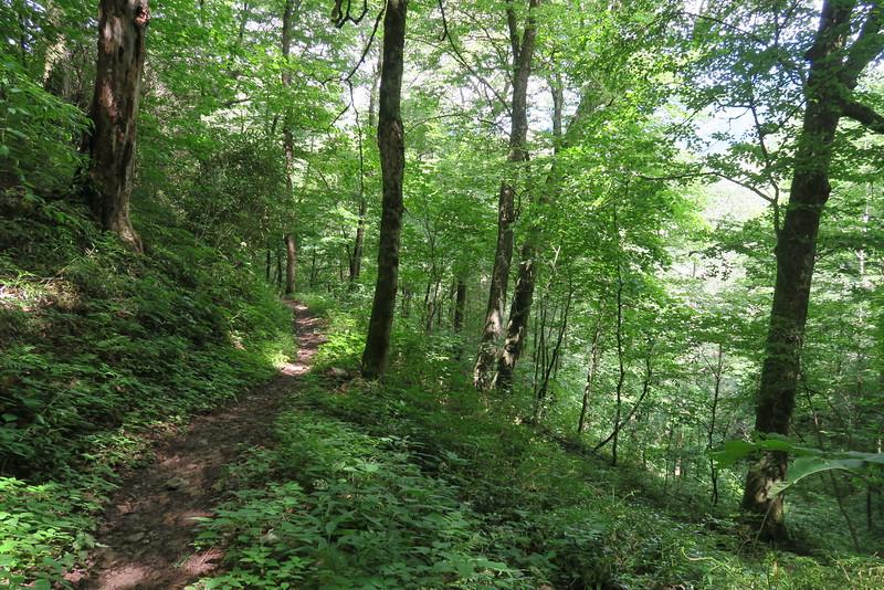 Enloe Creek Trail - 4,000'
