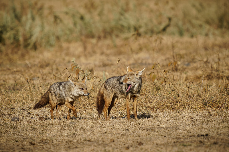 NgorongoroCrater-20181003-0124.jpg