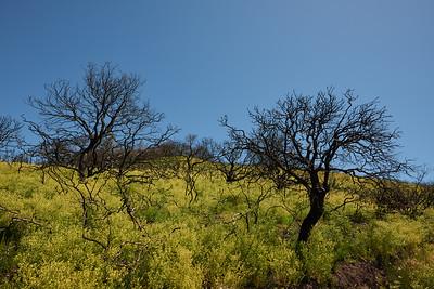 Sugarloaf Ridge 05.18 & 06.18
