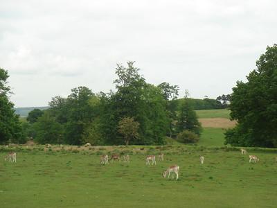 May 2007 - Knole Park, Sevenoaks