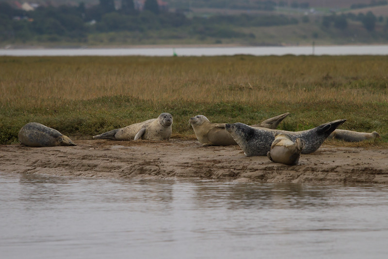 Pegwell Bay Nature Reserve (Seal Colony)