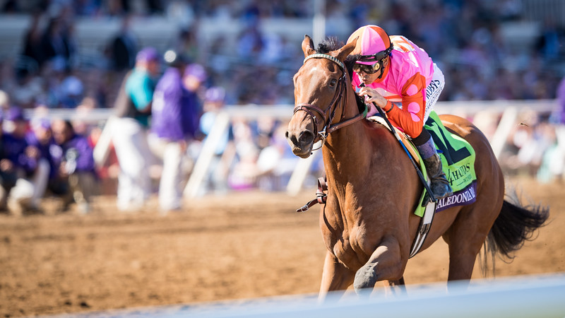 Calendonia Road (Quality Road) wins the BC Juvenile Fillies (G1) at Del Mar on 11.4.2017. Mike Smith up, Ralph Nicks trainer, Zoom and Fish Stable and Charlie Spiring and Newtown Anner Stud owners.