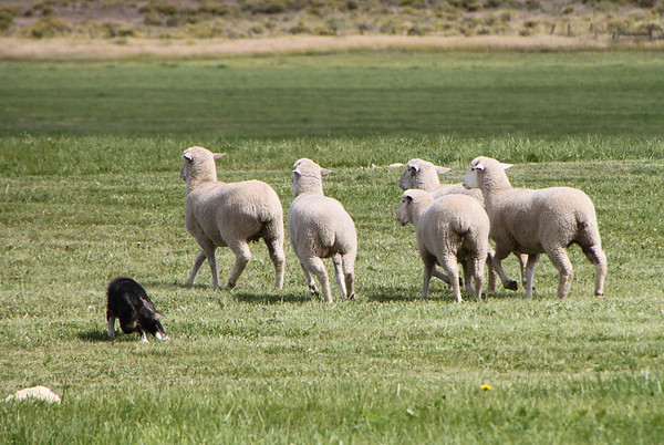 2011 Sheepdog Finals