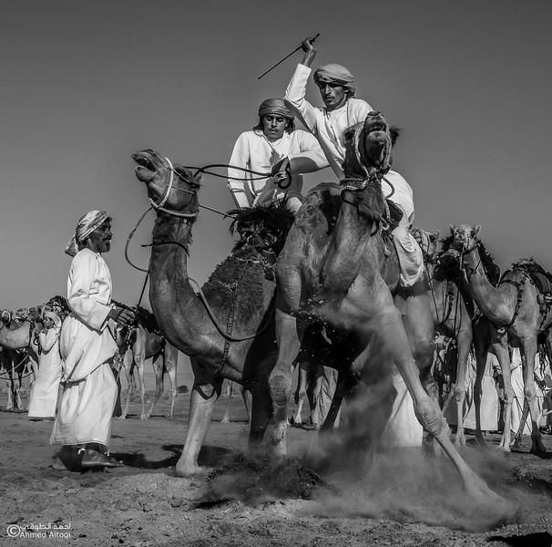camels (2)2- B&W.jpg