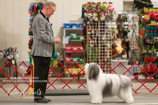 Charleston Kennel Club 2019