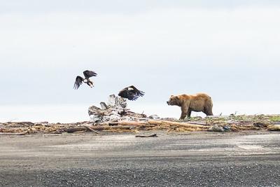 Katmai Bear Trip July 2017