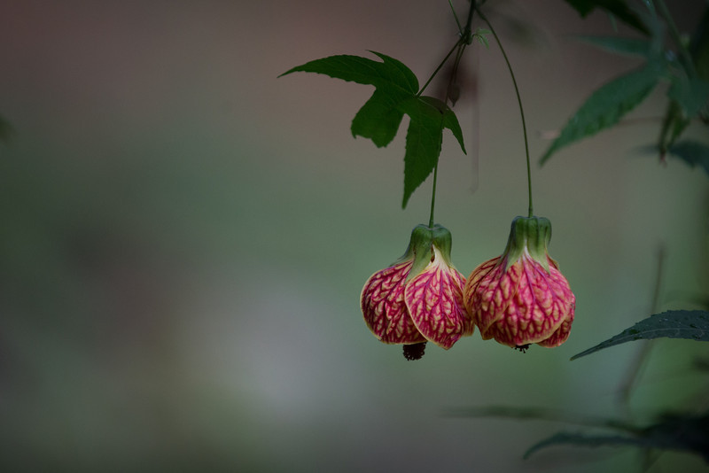 brazilian_flowers-_MG_1464-140307.jpg