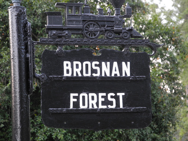 Brosnan Forest - Law - April 2011
