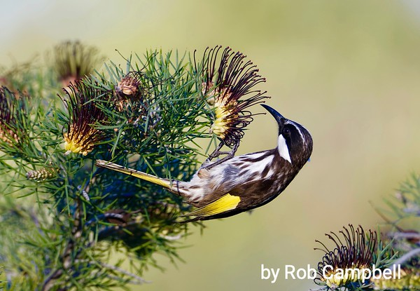 Rob's Bees & Birds