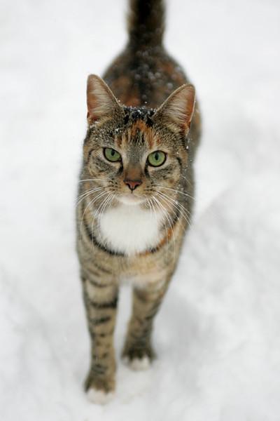 Snow 2010 086.jpg