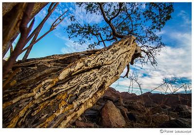 Namibian Landscapes