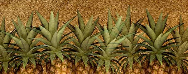 2018 new fileAAAAA2018 - Pineapples! - M_1.jpg