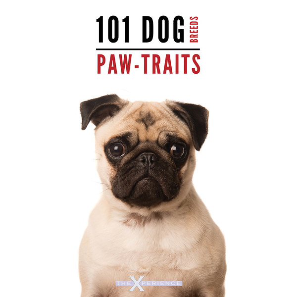 101 Dog Pawtraits.jpg