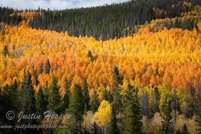 Poudre Canyon Fall Color