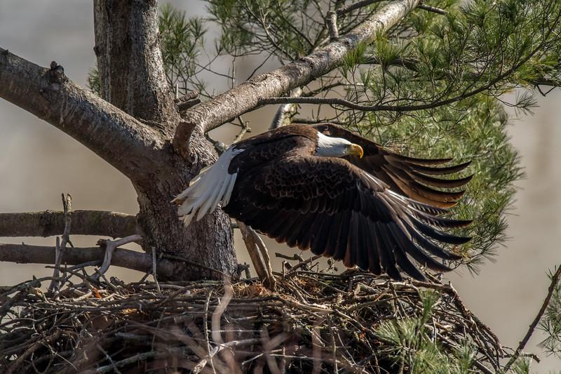 ulster-eagle-102.jpg